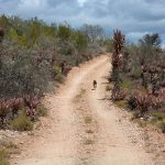 Fort Beaufort campsites with great hiking trails