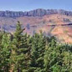 Beautiful forest & mountain in Hogsback