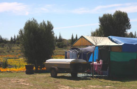 Olive Caravan park Nieuwoudtville