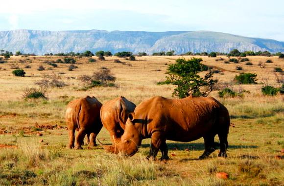 Karoo National Park - SANparks