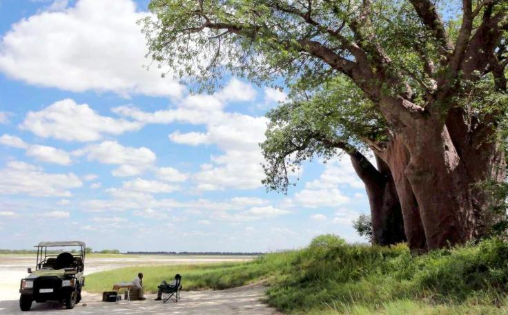 Baobab tree in remote Central Botswana
