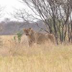 Wildlife in Makgadikgadi Pans National Park