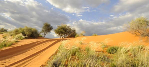 The Kalahari Desert of the Ghanzi Region