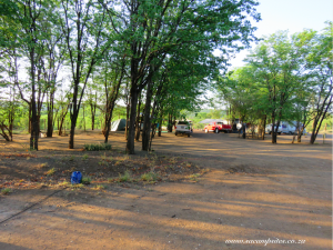 campsites under trees