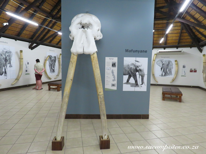 Letaba campsite with pool & elephant museum