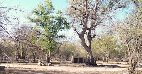 Thakadu Bush Camp