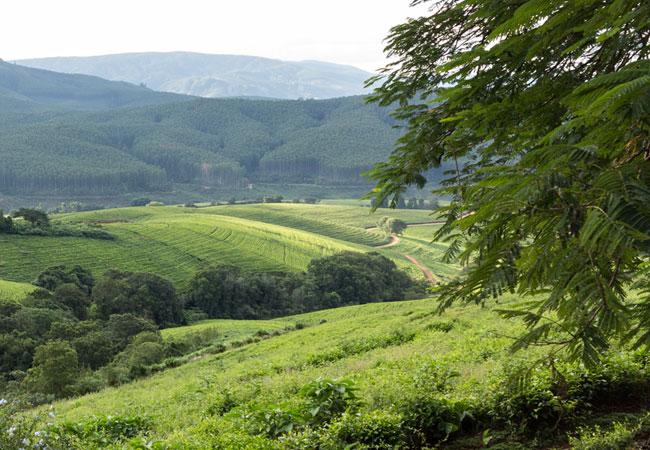 The Wolkberg and Drakensberg mountains of Haenertsburg